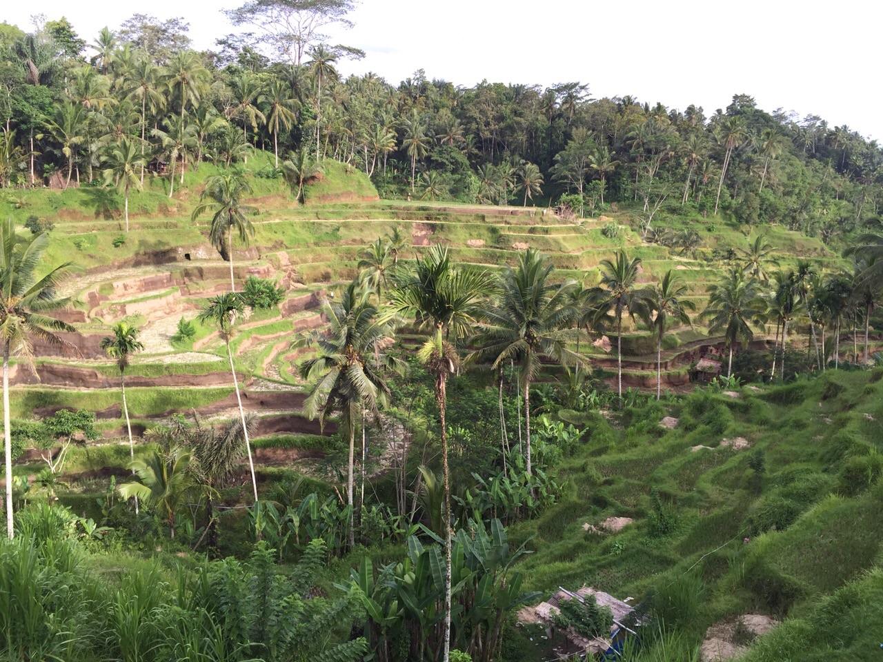 Paket Tour Bali 4h 3m Opsi 2 Wisata Murah 4 Hari 3 Malam Kami Kemas Dengan Harga Para Wisatawan Yang Liburan Ke Kadang Kala Agak Bingung Untuk Menentukan Jadwal Kegiatan