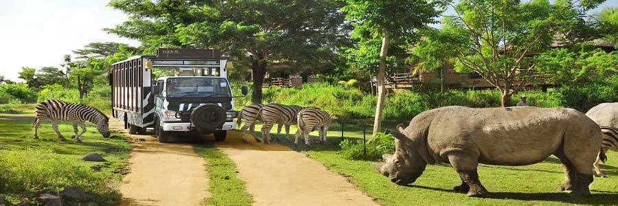 bali bsafari