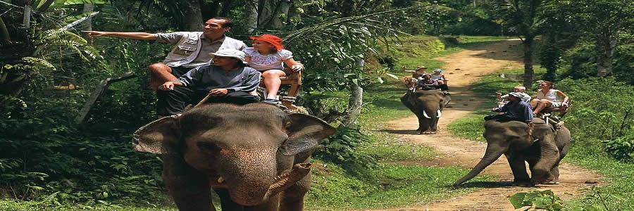 wisata-naik-gajah-bali-elephant-ride-tour